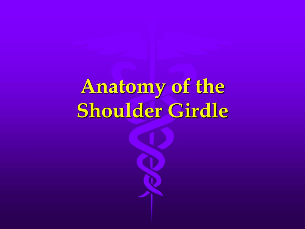 anatomy of the shoulder girdle l.