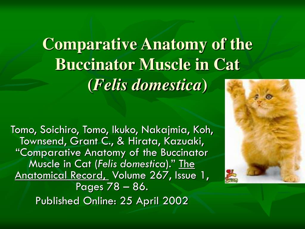 comparative anatomy of the buccinator muscle in cat felis domestica l.