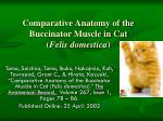 comparative anatomy of the buccinator muscle in cat felis domestica