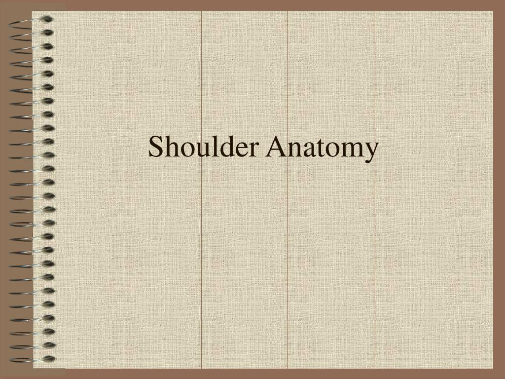 shoulder anatomy l.
