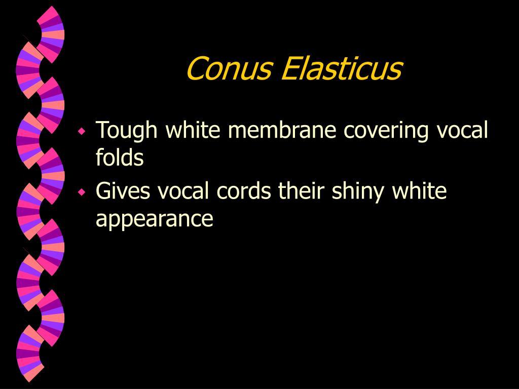 Conus Elasticus