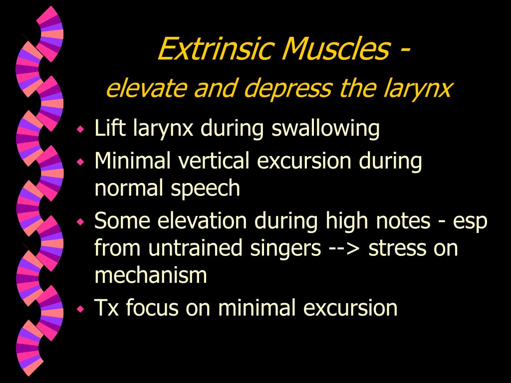 Extrinsic Muscles -