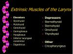 extrinsic muscles of the larynx