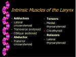intrinsic muscles of the larynx