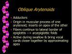oblique arytenoids