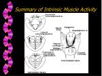 summary of intrinsic muscle activity