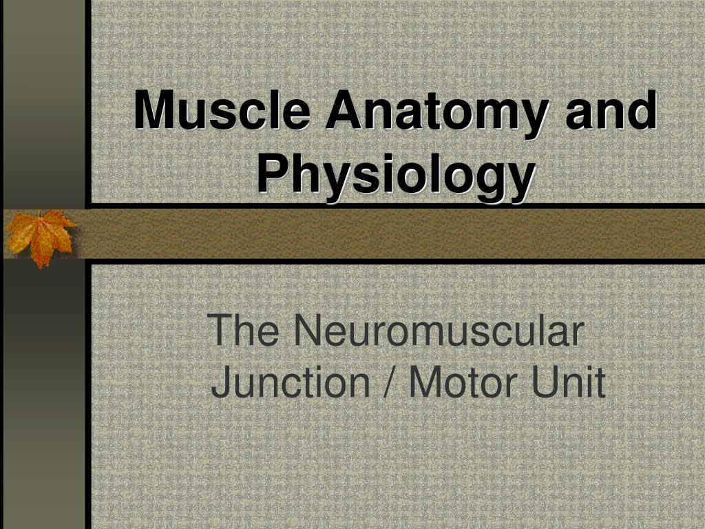 muscle anatomy and physiology l.
