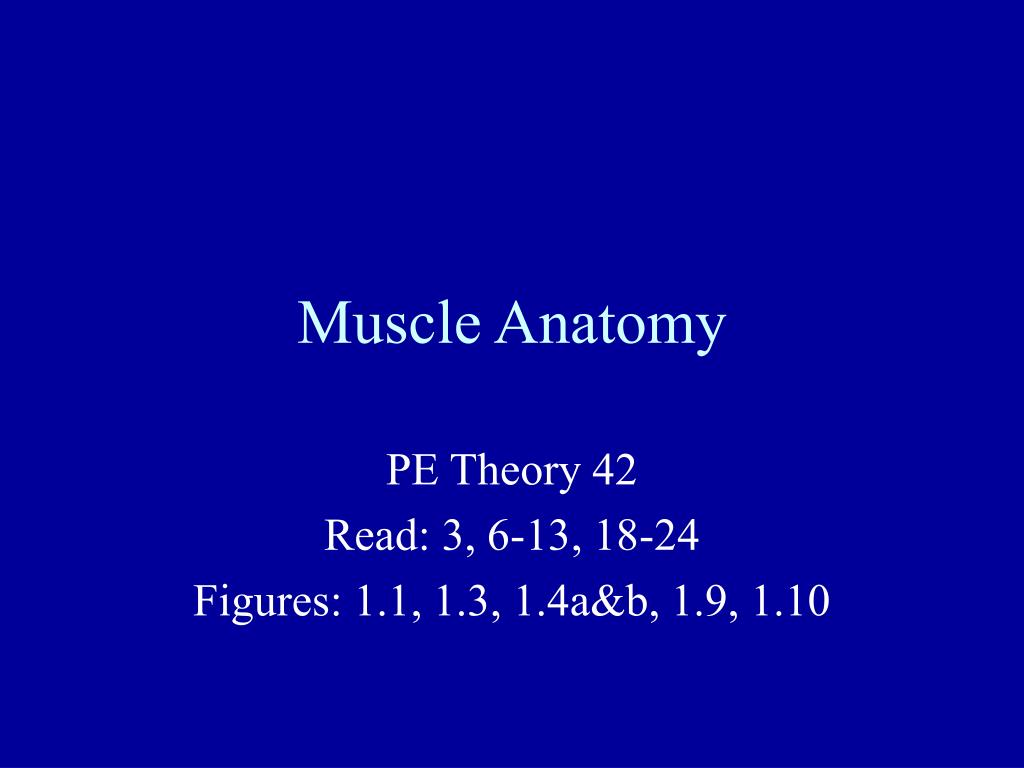 muscle anatomy l.