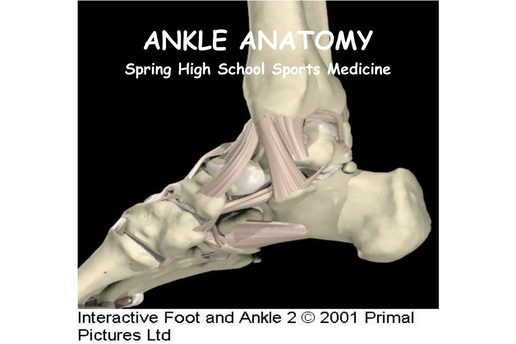 PPT - ANKLE ANATOMY PowerPoint Presentation - ID:30309