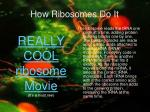 how ribosomes do it
