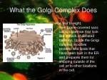 what the golgi complex does