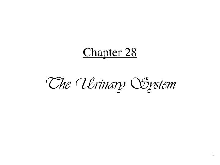 chapter 28 the urinary system n.