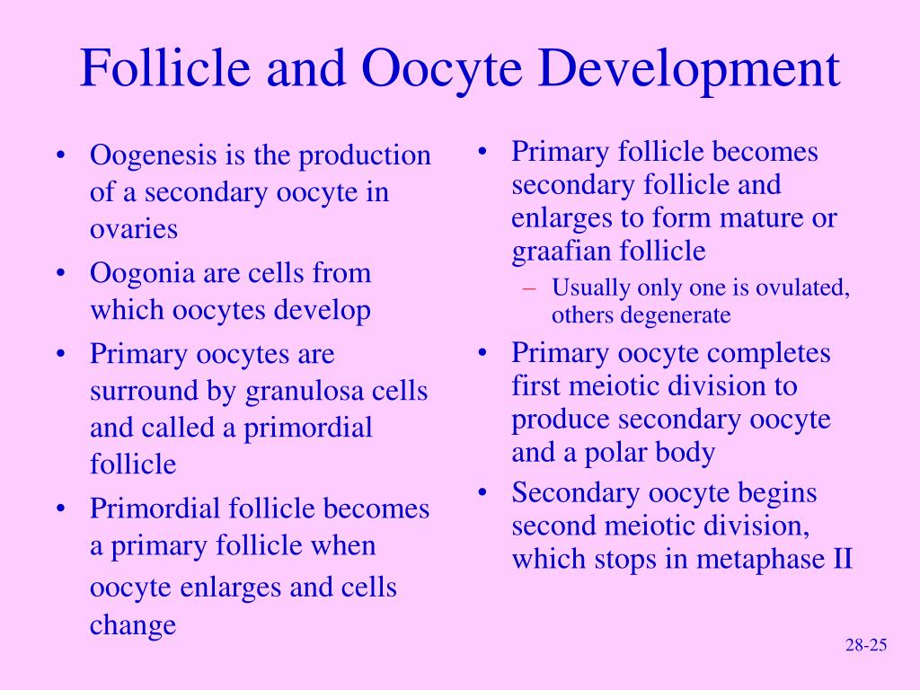 Oogenesis is the production of a secondary oocyte in ovaries