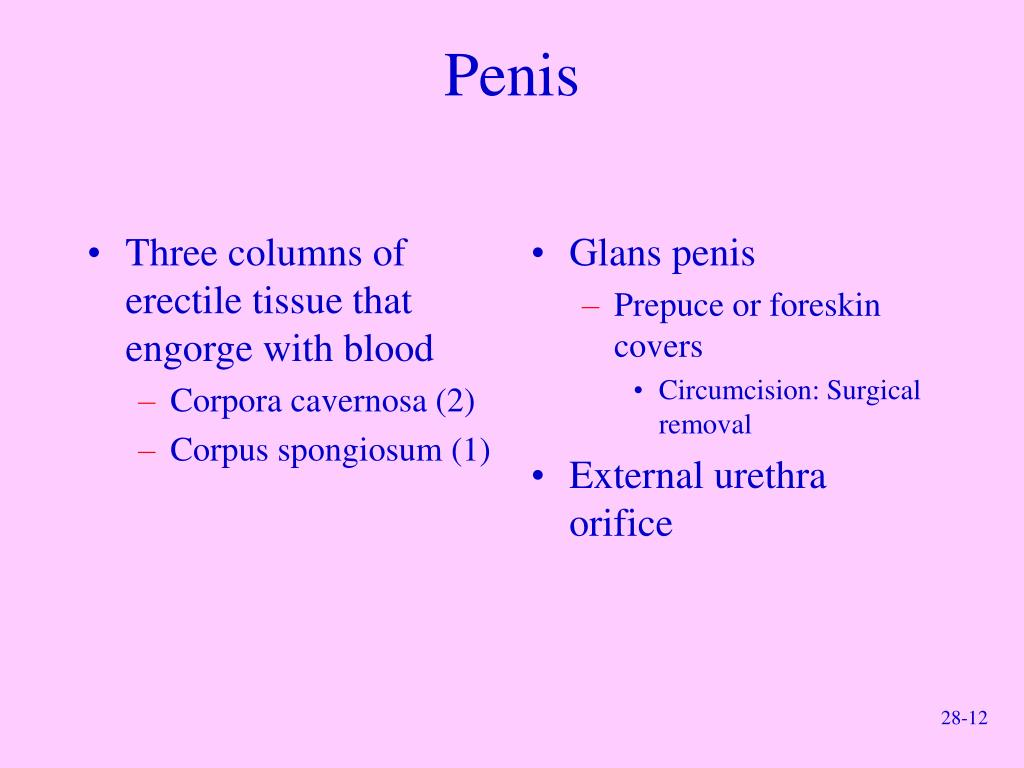 Three columns of erectile tissue that engorge with blood