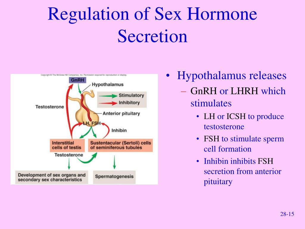 Regulation of Sex Hormone