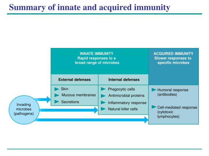 Summary of innate and acquired immunity