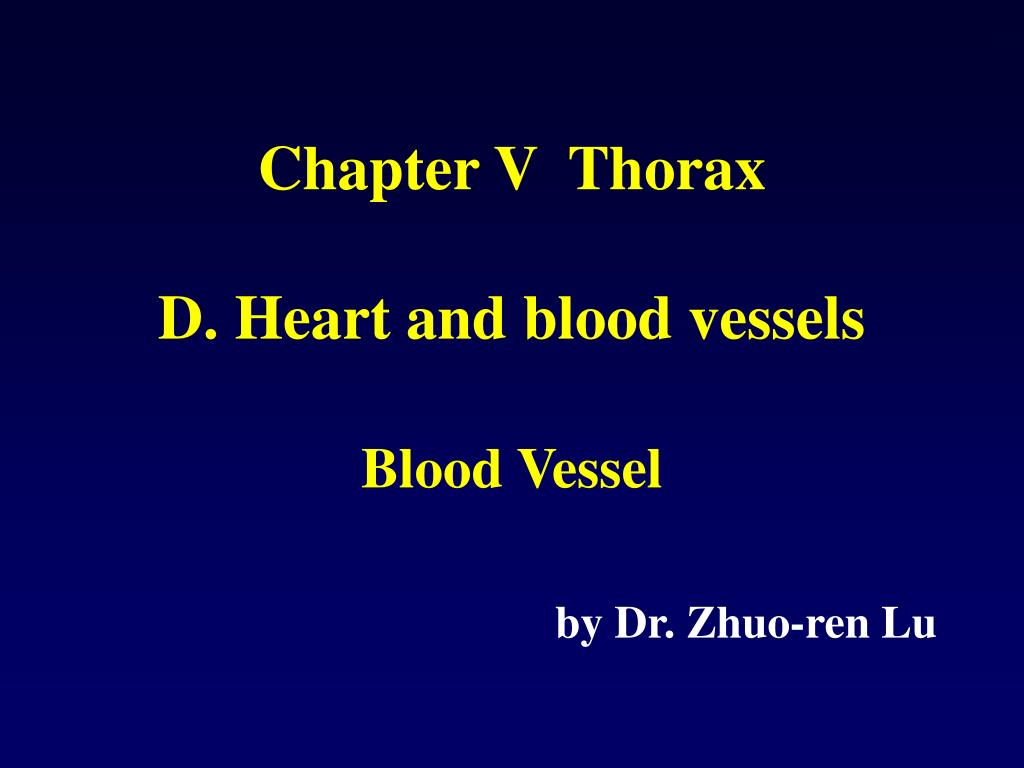 PPT - Chapter V Thorax PowerPoint Presentation - ID:304540