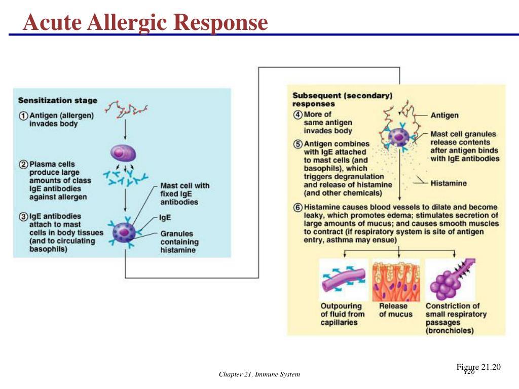 Acute Allergic Response