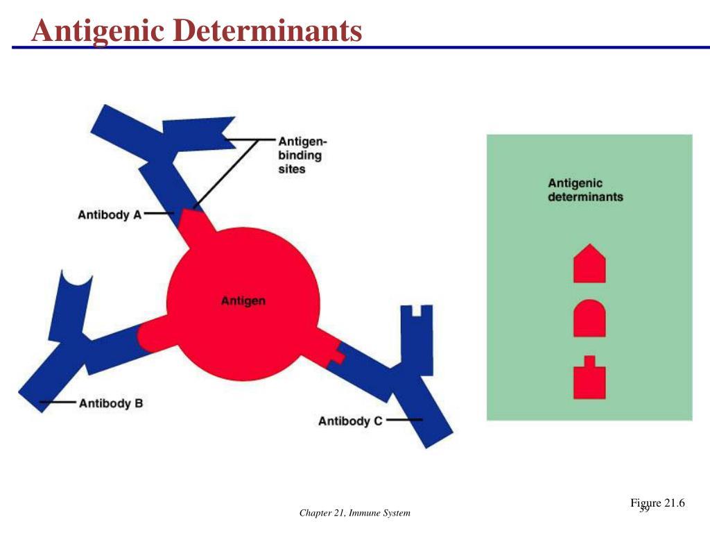 Antigenic Determinants