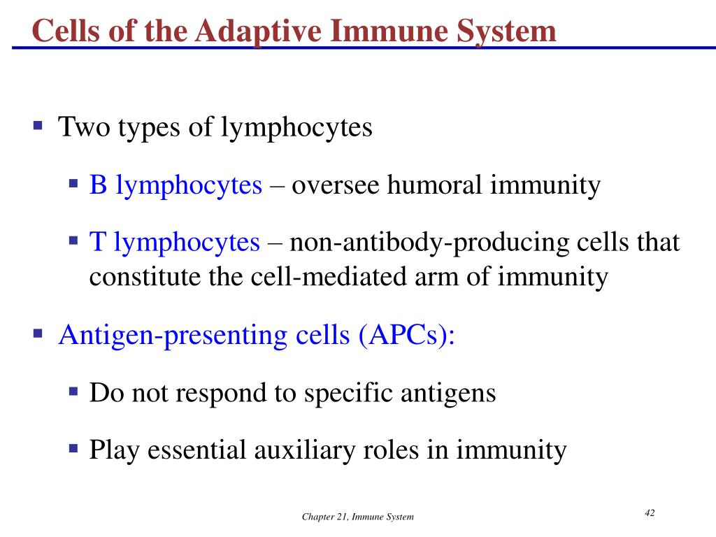 Cells of the Adaptive Immune System