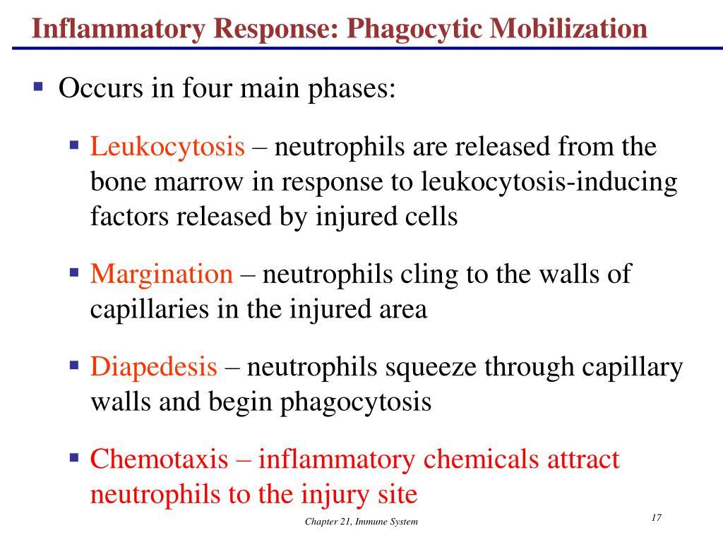 Inflammatory Response: Phagocytic Mobilization