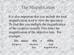 the magnification