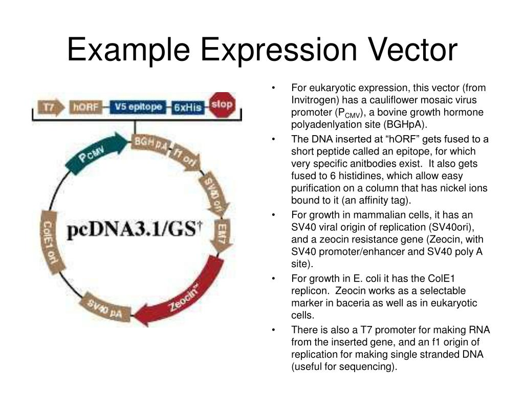 Example Expression Vector