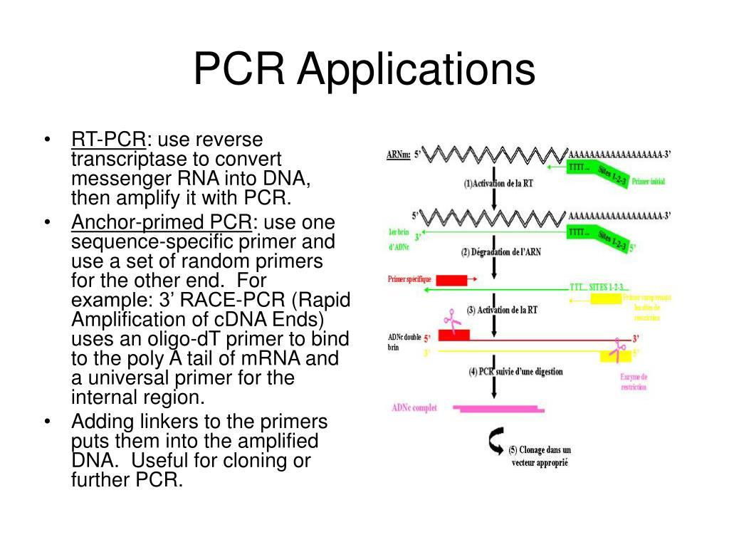 PCR Applications