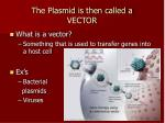 the plasmid is then called a vector