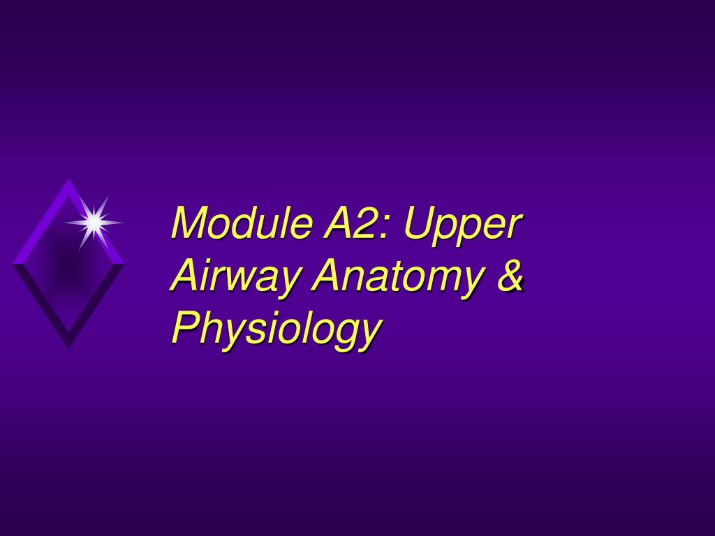 Ppt Module A2 Upper Airway Anatomy Physiology Powerpoint