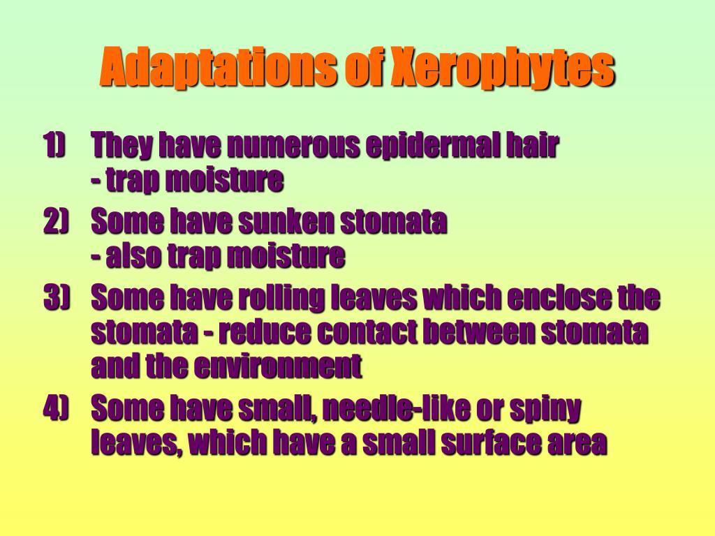Adaptations of Xerophytes