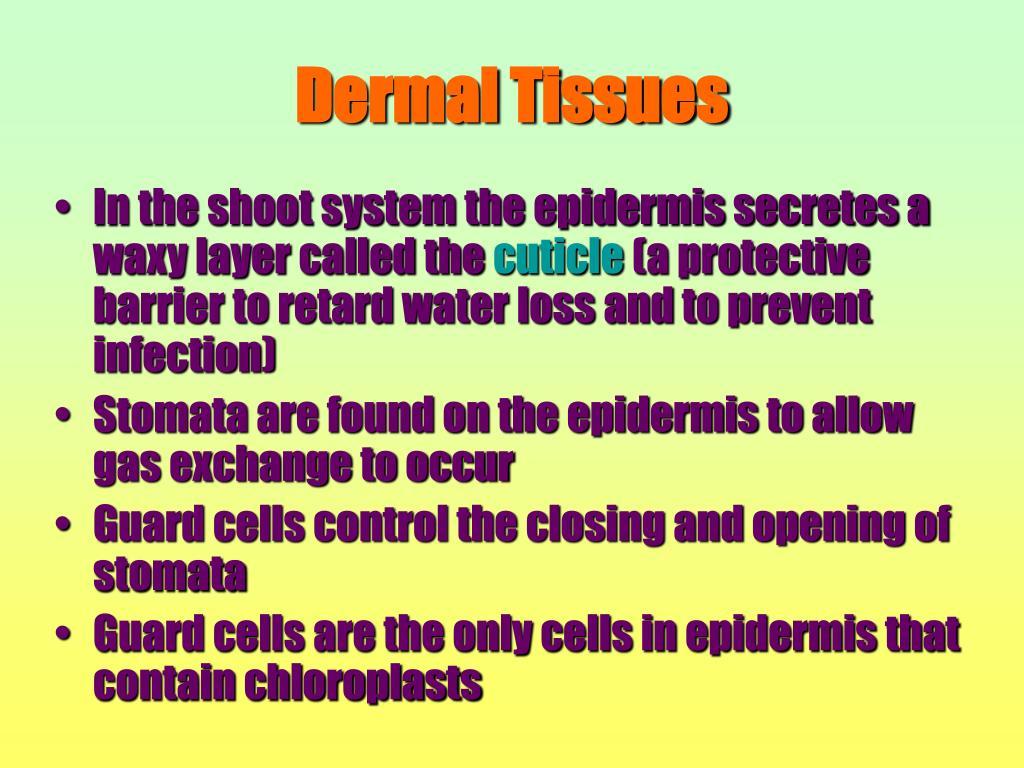 Dermal Tissues