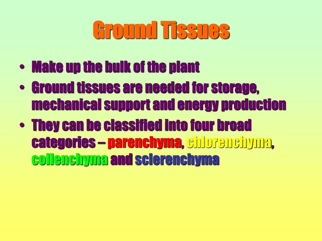 Ground Tissues