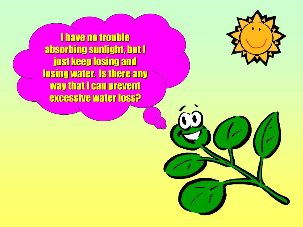 I have no trouble absorbing sunlight, but I just keep losing and losing water.  Is there any way that I can prevent excessive water loss?