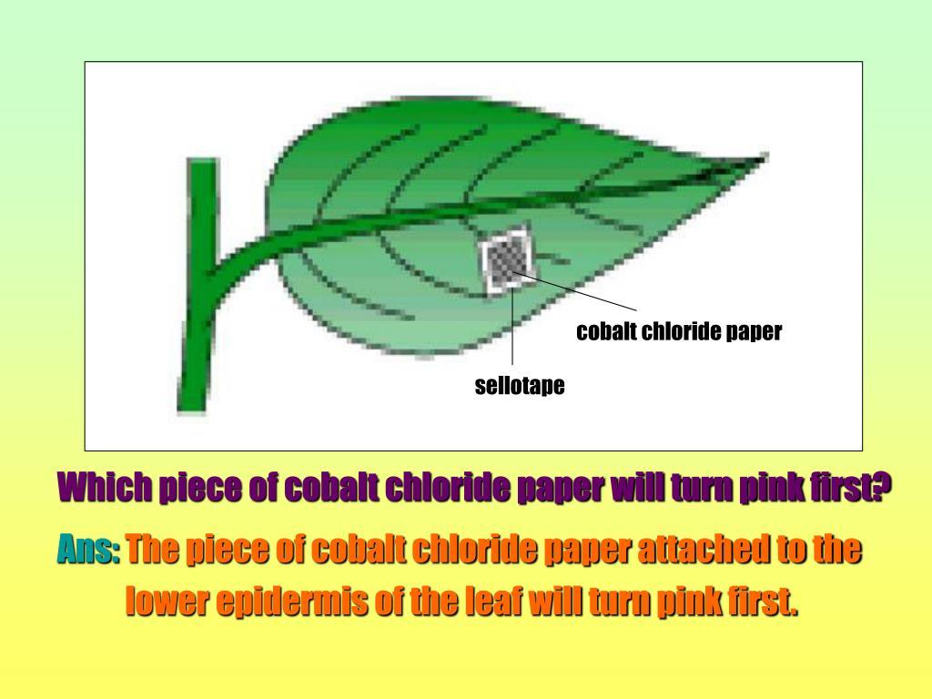 cobalt chloride paper