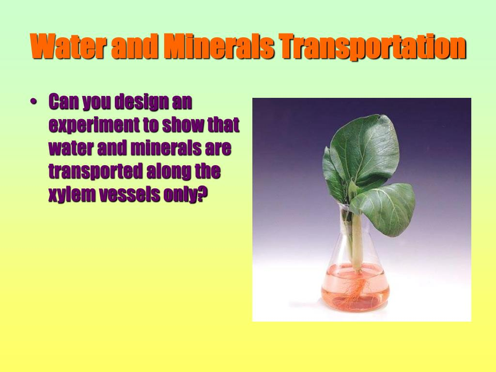 Water and Minerals Transportation