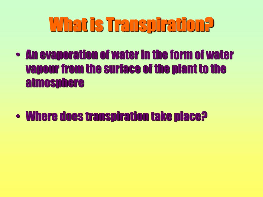What is Transpiration?