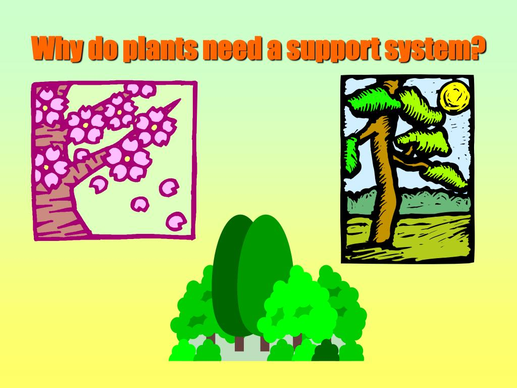 Why do plants need a support system?
