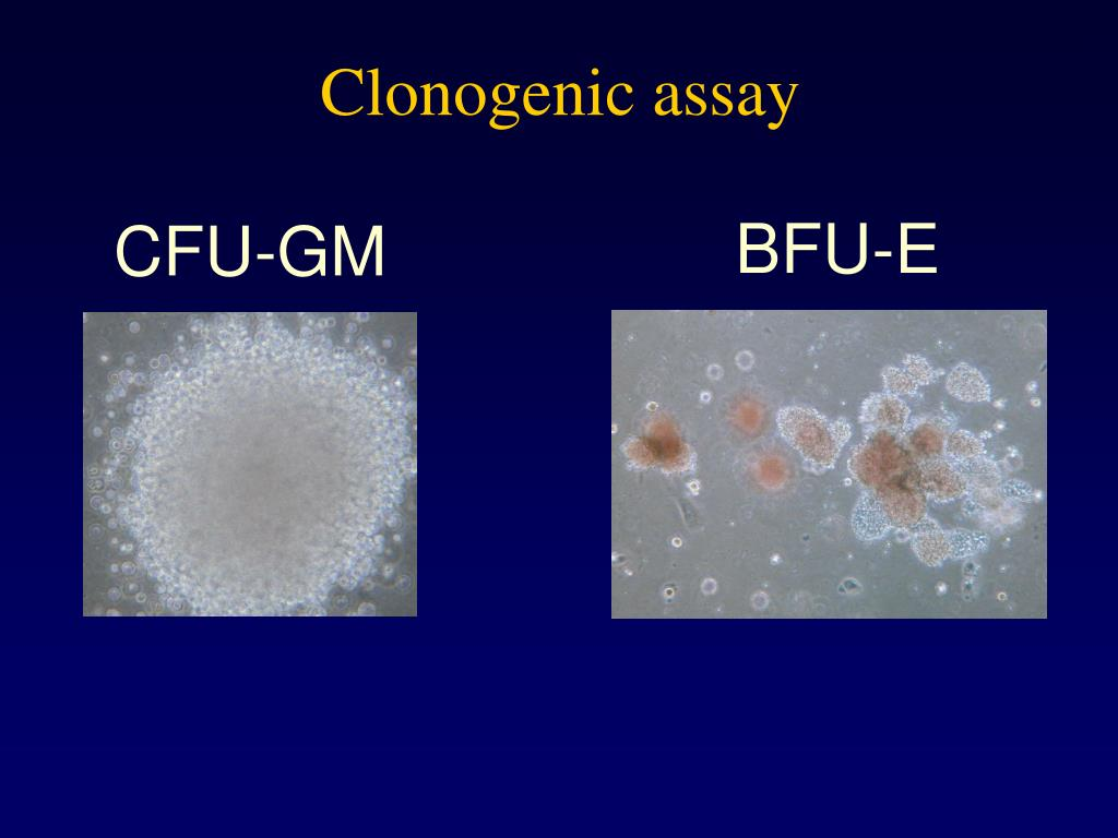 Clonogenic assay