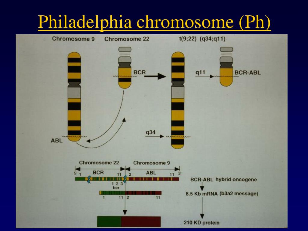 Philadelphia chromosome (Ph)