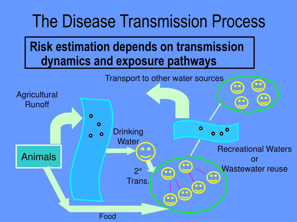 The Disease Transmission Process