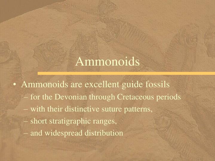 Ammonoids