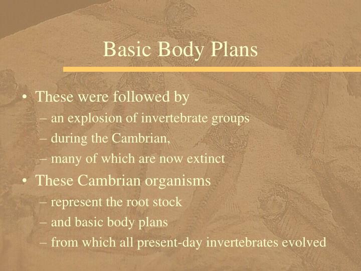 Basic Body Plans