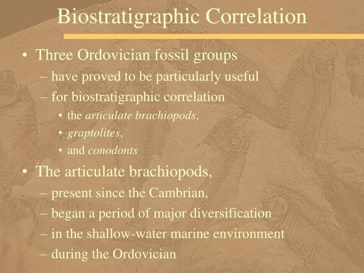 Biostratigraphic Correlation