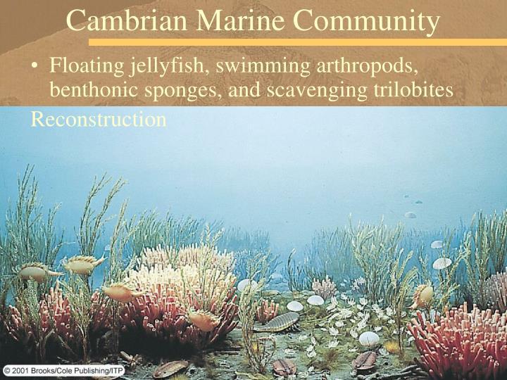 Cambrian Marine Community