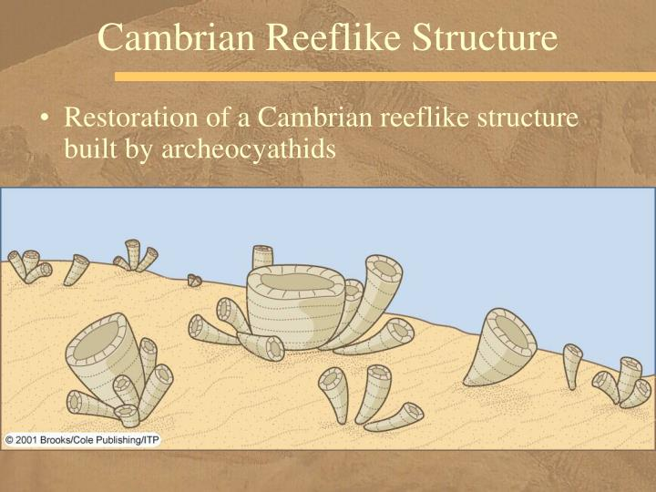 Cambrian Reeflike Structure