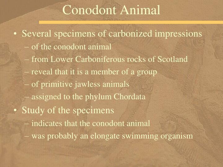 Conodont Animal
