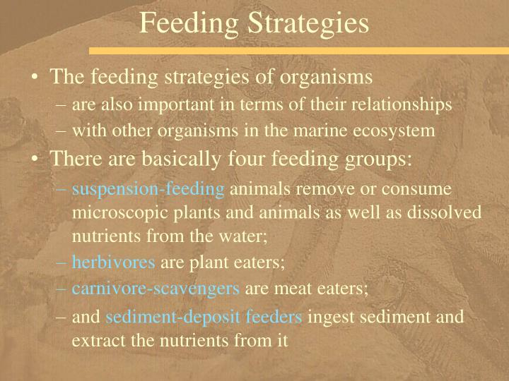 Feeding Strategies