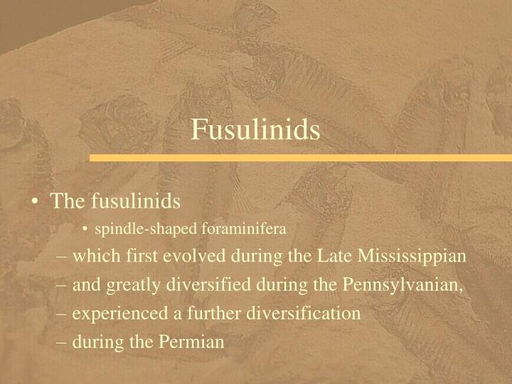 Fusulinids