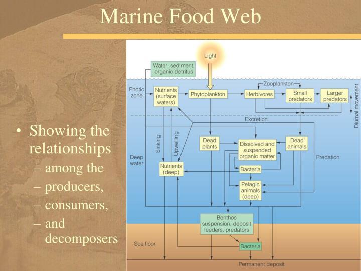 Marine Food Web